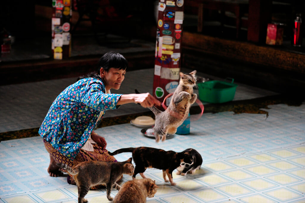 Jumping Cat Monastery 6