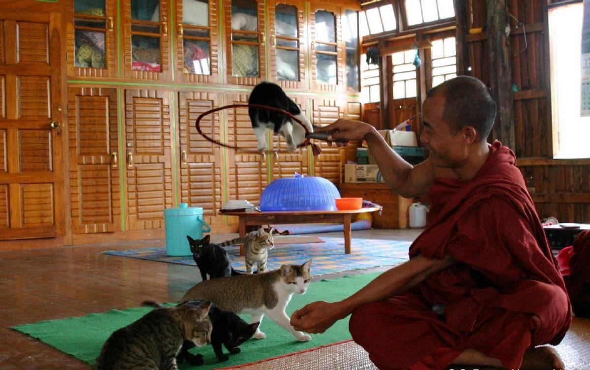 Jumping Cat Monastery 7